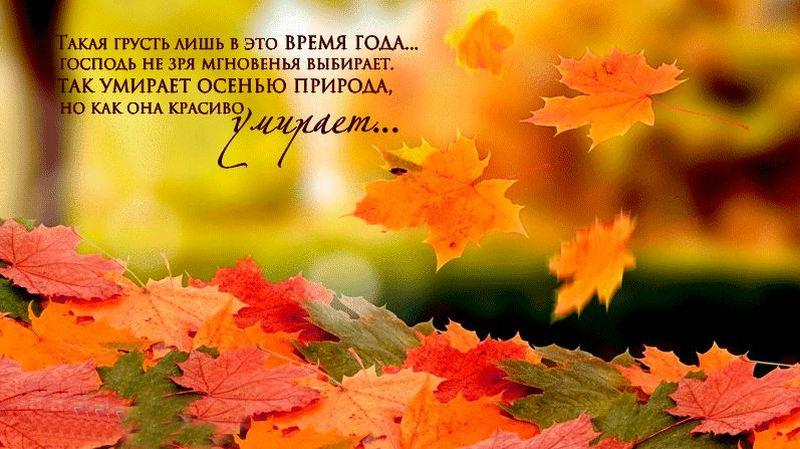 Красивые цитаты про осень | Статусы про времена года